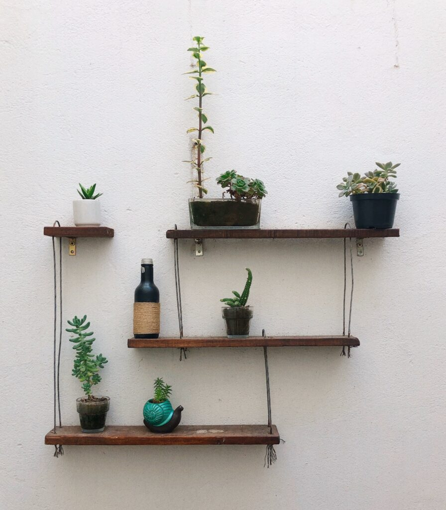 plants on shelf